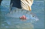 A nice Bonefish from our last trip to Ascension Bay